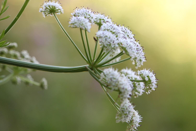 wild flowers 1.jpg