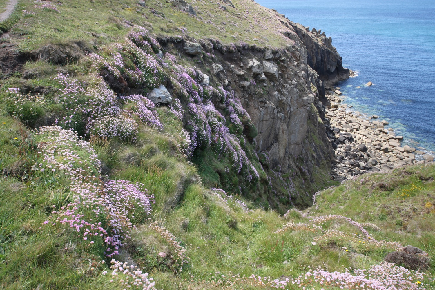 sea thrift on rocky cliffs