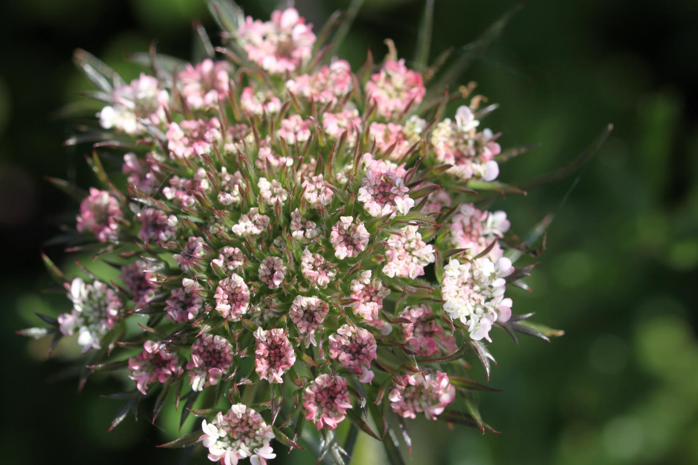 wildflowers 2.jpg