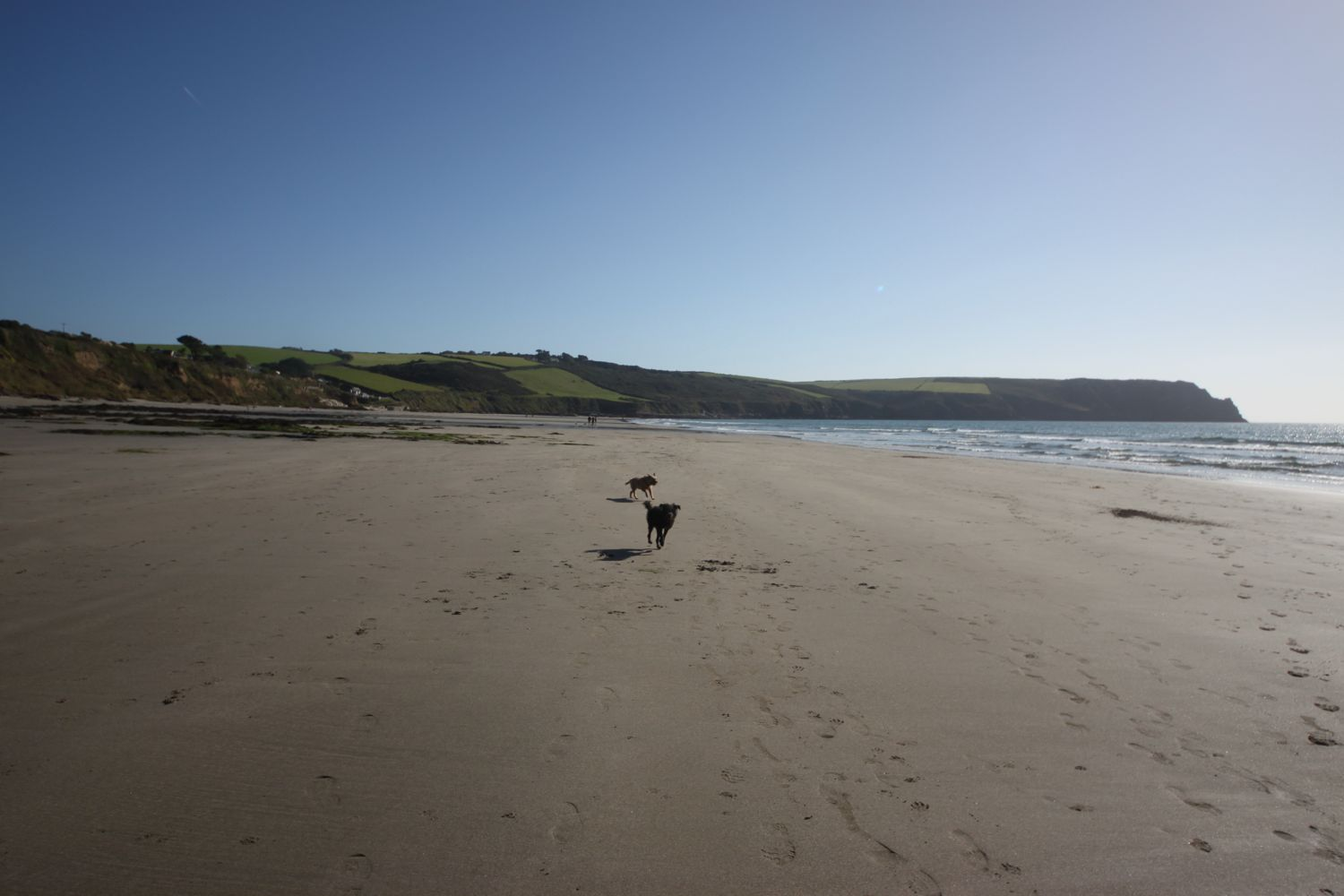 dogs on pendower beach