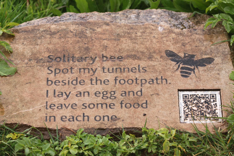 solitary bee.jpg