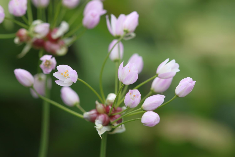 wild flowers 17.jpg