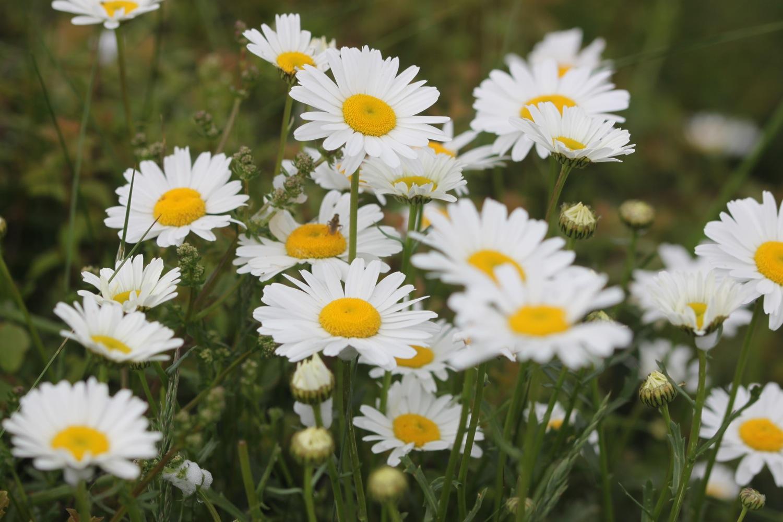 wild flowers 2.jpg