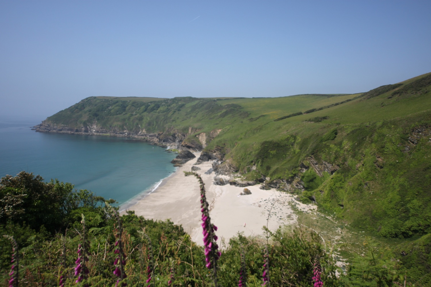 foxgloves over lantic bay
