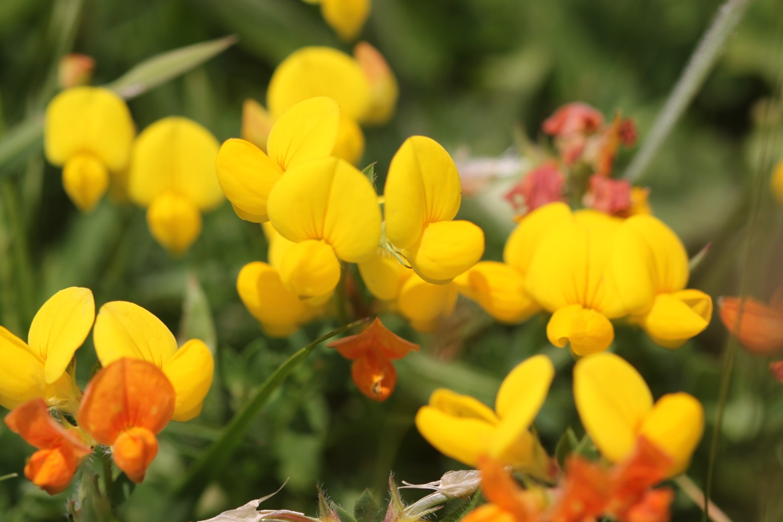 wild flowers 15.jpg
