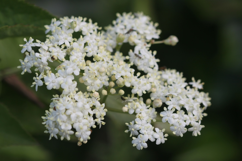 wild flowers 10.jpg