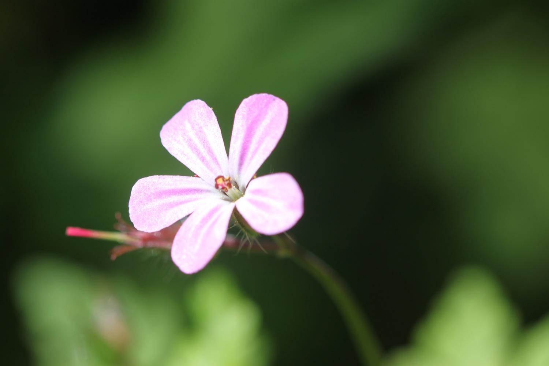 wild flowers 13.jpg
