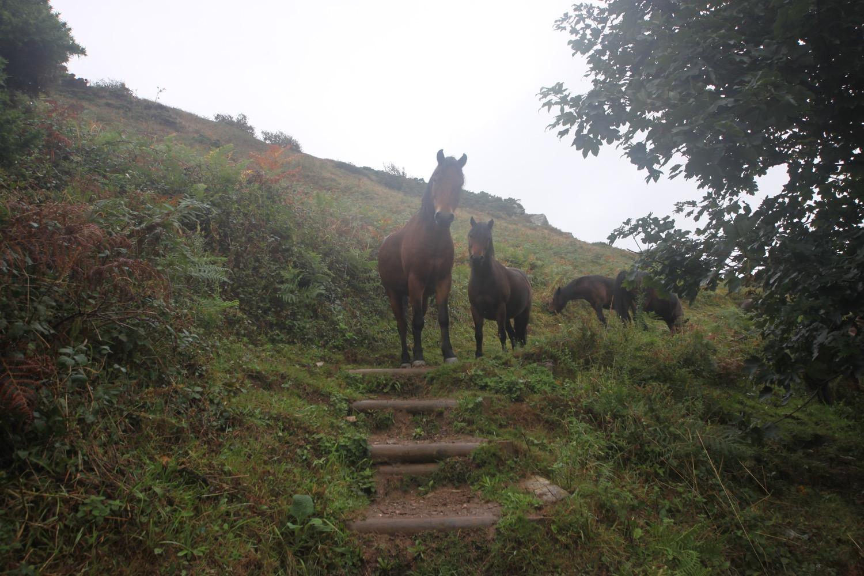 friendly ponies