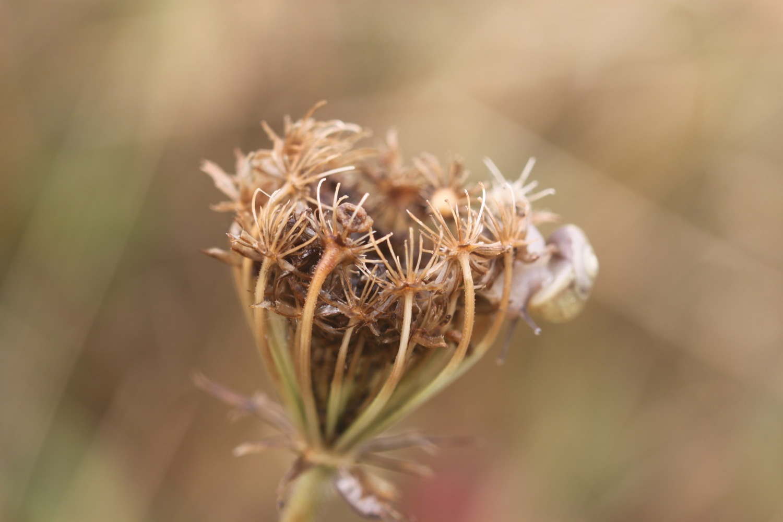 wildflowers 9.jpg
