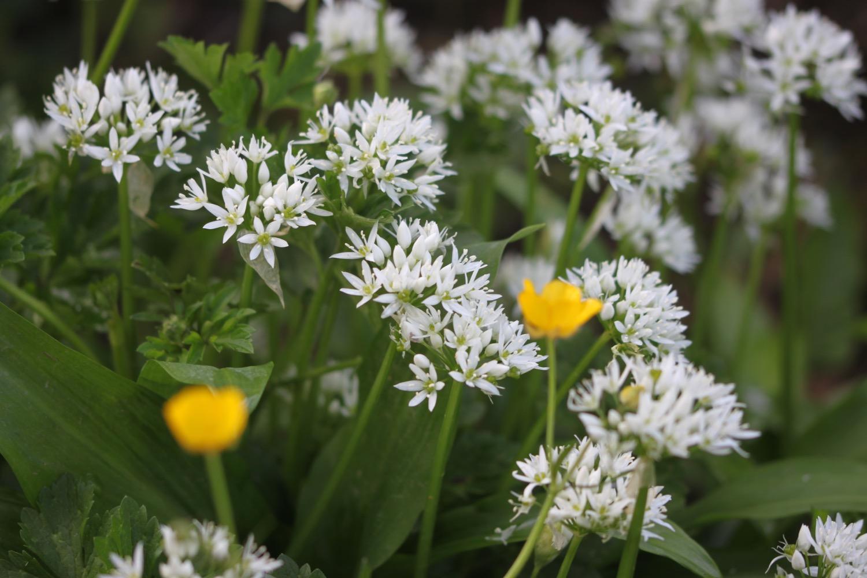 wildflowers 7.jpg