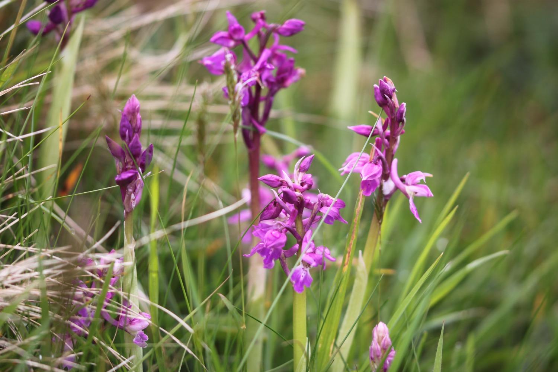 orchids 3.jpg