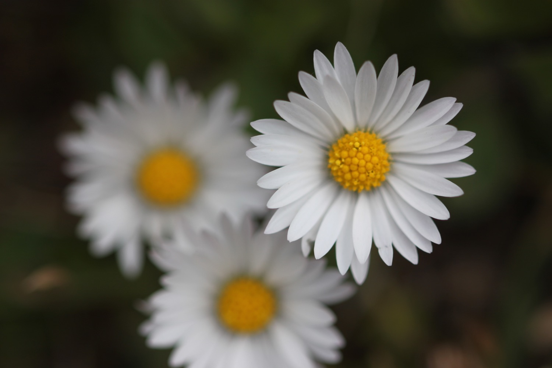 wildflowers 14.jpg
