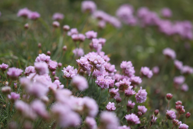 wildflowers 18.jpg