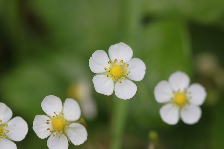 wildflowers 26.jpg