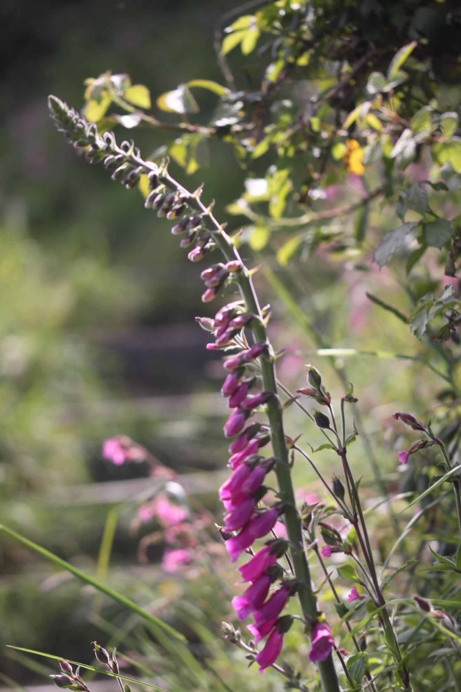 wildflowers 27.jpg