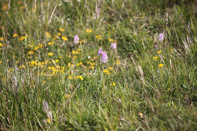 orchids 7.jpg