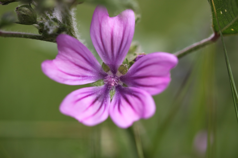 wildflowers 22.jpg