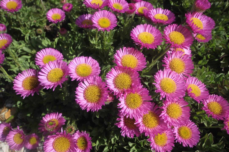 wildflowers 11.jpg