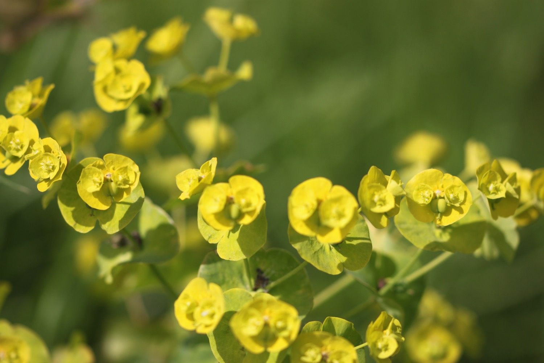wildflowers 15.jpg