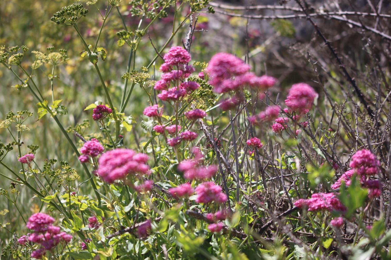 wildflowers 31.jpg