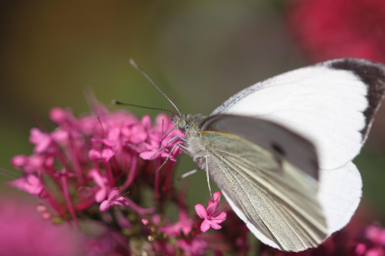 butterflies 3.jpg