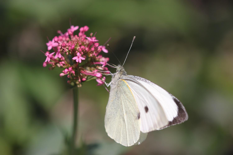 butterflies 5.jpg