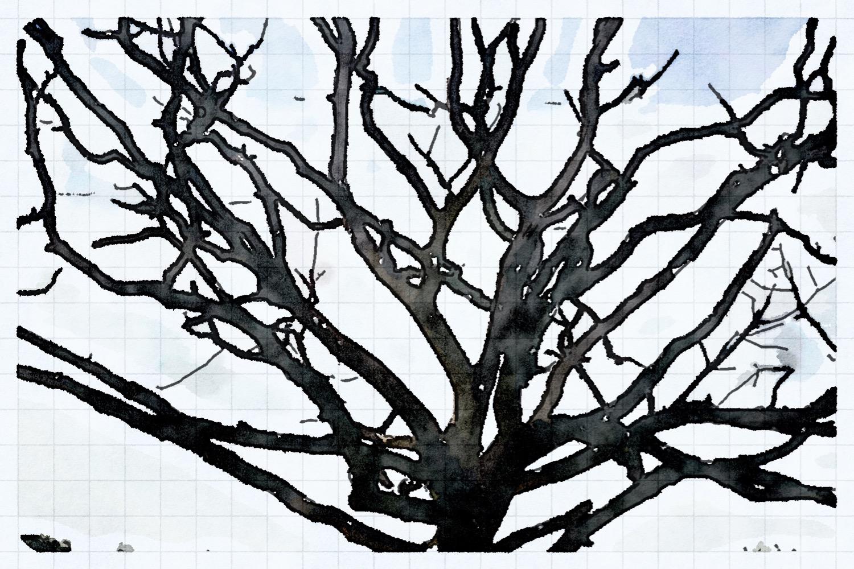 dead tree on st helen's duver