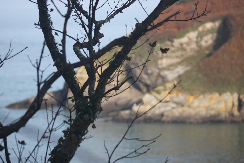 watermouth bay 5.jpg