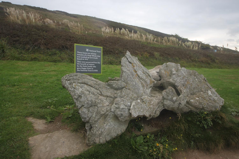 preserved whalebone