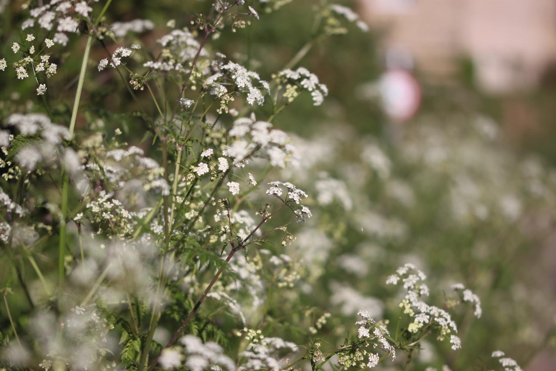 wildflowers 6.jpg