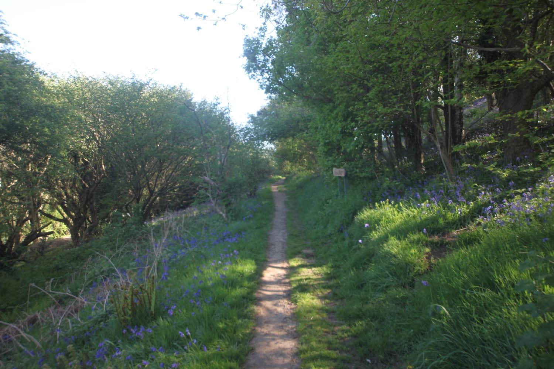 allington hill 6.jpg