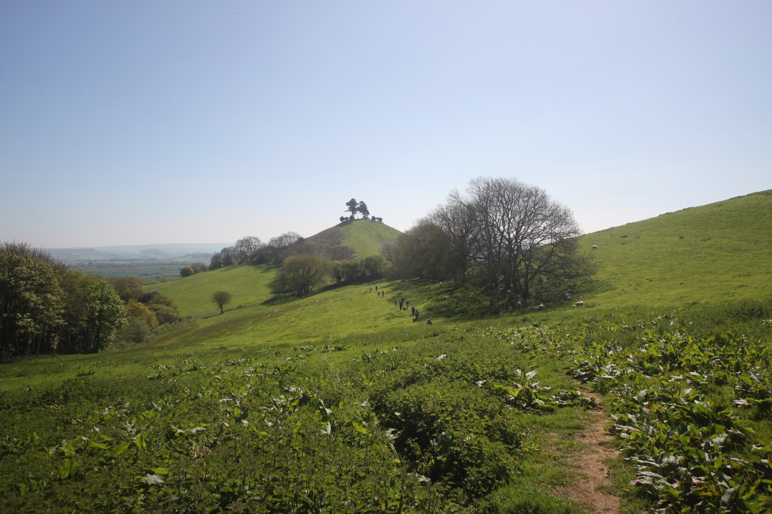 colmers hill 6.jpg