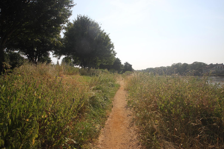 duke's meadow