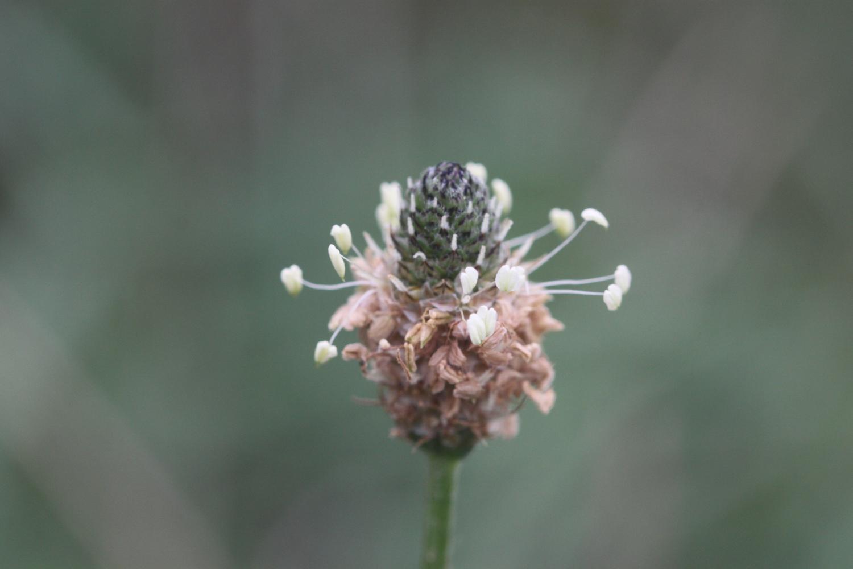 wildflowers 8.jpg