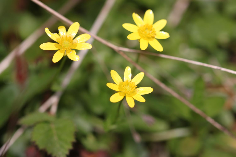 wildflowers set 4 3.jpg