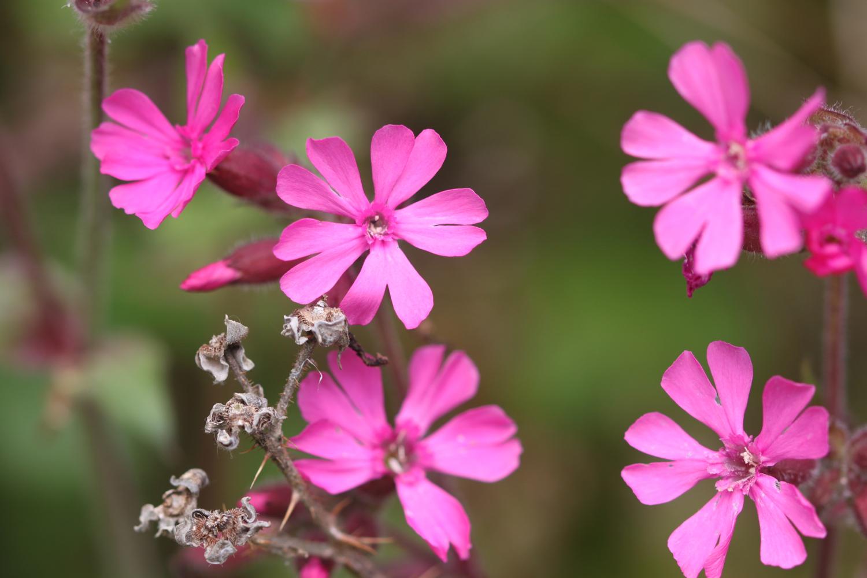 wildflowers set 4 7.jpg