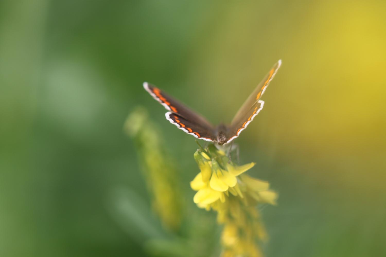 butterflies 7.jpg