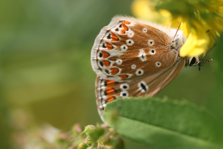 butterflies 8.jpg