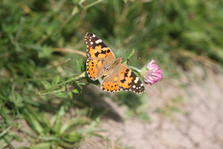 butterflies 9.jpg