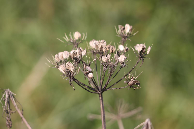 flowers 18.jpg