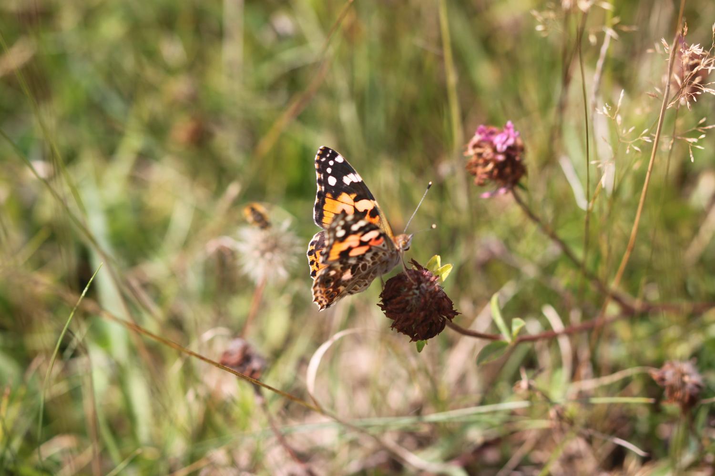 butterflies 11.jpg