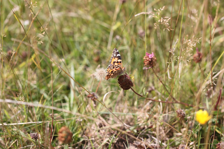 butterflies 10.jpg