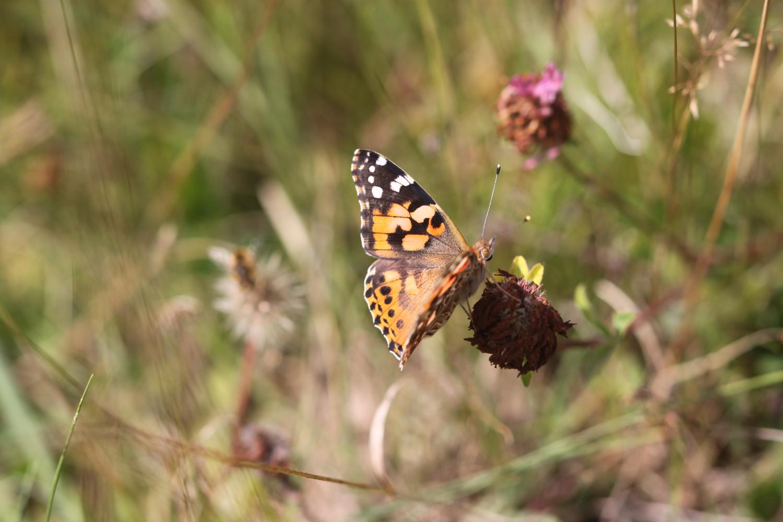 butterflies 12.jpg