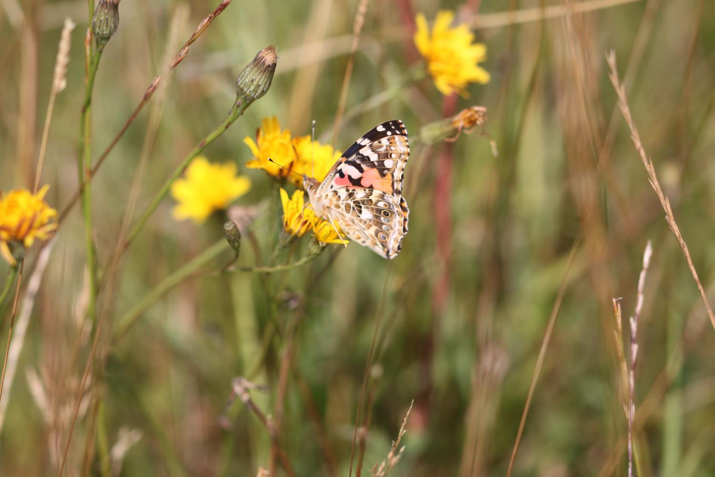 butterflies 13.jpg