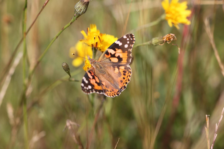 butterflies 14.jpg