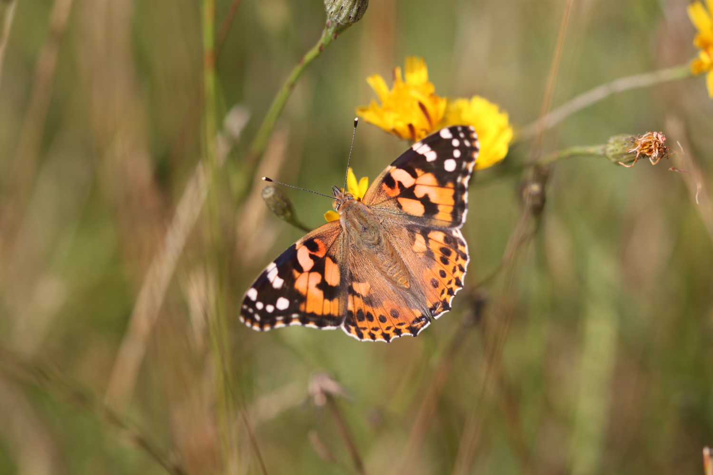 butterflies 15.jpg