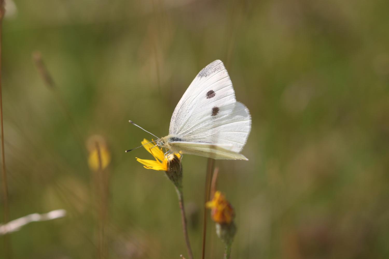butterflies 16.jpg