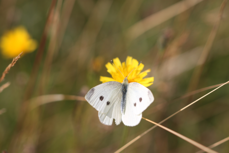 butterflies 17.jpg