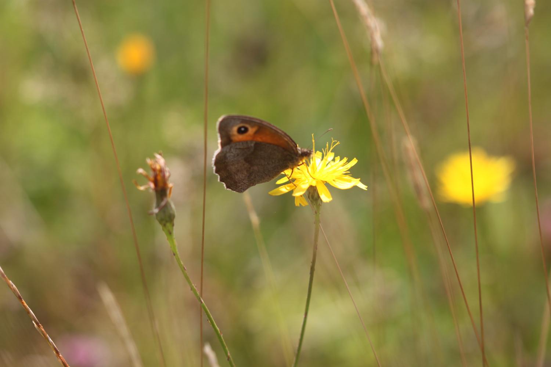 butterflies 18.jpg