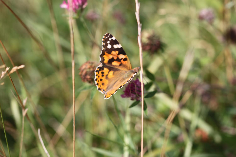 butterflies 19.jpg